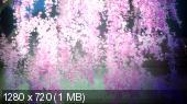 ���� ���������� ��-1 / Nurarihyon no Mago / Grandchild of Nurarihyon (01-26 �� 26) (2010/HDTVRip)