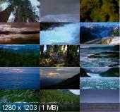 ������� �������� / Echoes of Creation (2010) BDRip
