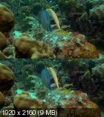Удивительный океан в 3Д / Amazing Ocean 3D Вертикальная